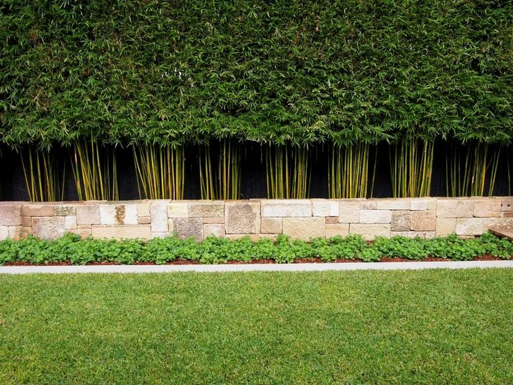 Best 25 Bamboo hedge ideas on Pinterest Bamboo screen garden