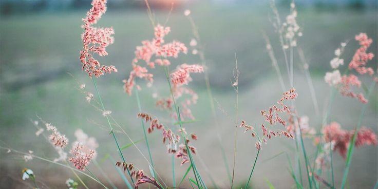 Bonjour à vous :)  Le bonheur survient lorsque tu arrêtes de te comparer.   Belle journée à vous et profitez bien