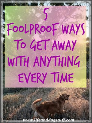 5 Foolproof Ways to Get Away With Anything Every Time at Life and Dog stuff blog!