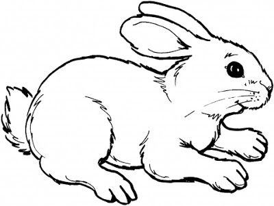 Line drawings of animals cute animal rabbit coloring books sheet for kids drawing