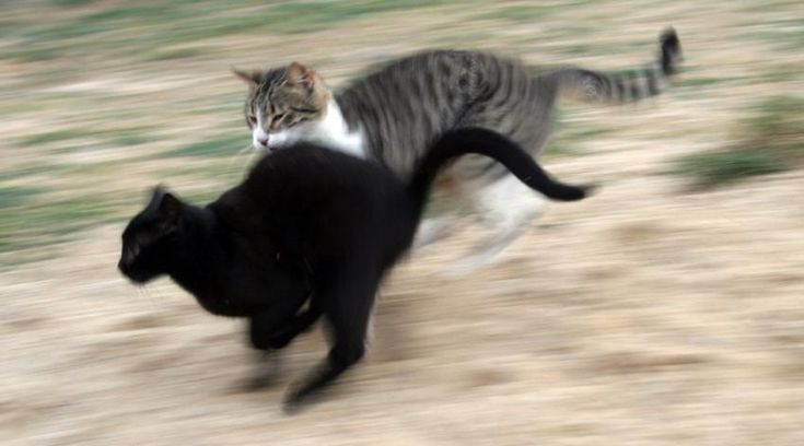 Fun Facts About Cats [Slideshow]says cats can sprint at up to 30 mph - wow!