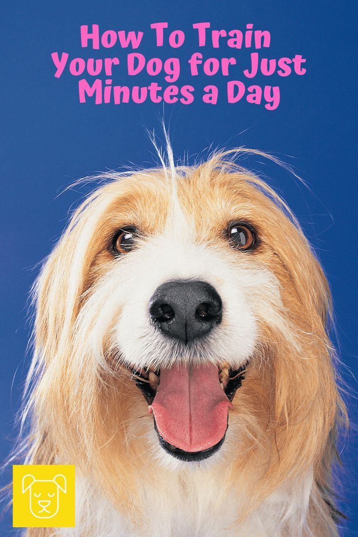 How To Train Your Dog In Just Minutes A Day Dog Training