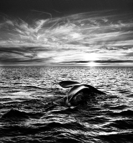 Brazilian photo journalist Sebastiao Salgado  records the human, animal and industrial world in all its sublime beauty and tragedy. His work makes my heart ache with both joy and sorrow.