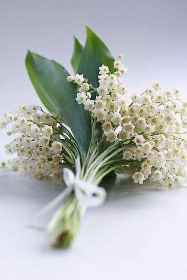 Поздравление февраля, свадебные ландыши открытки