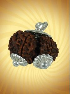 Gauri Shankar Rudraksha: These #very #rare #rudraksha symbolize the union of Siva and Parvati . Promotes awakening of inner consciousness, #spiritual evolution. Excellent for those who have problems to find their soul mate or have existing #relationship problems. Influence in each aspect of life: #job, #marriage, #children or #business.