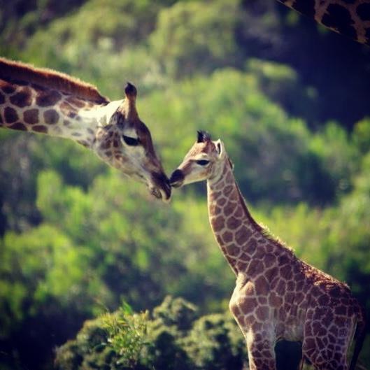 Kragga Kamma Game Park, Port Elizabeth, South Africa.