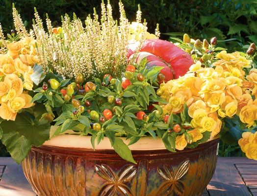 Fall Container Gardening Inspiration