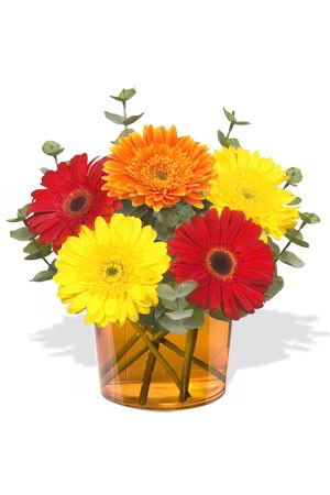 Fireworks    Fireworks will dazzle you with an explosion of vivid colours. This beguiling bouquet of intensely coloured Gerberas will brighten up anybody's day. The amazing value will make you feel pretty good too. $41.14