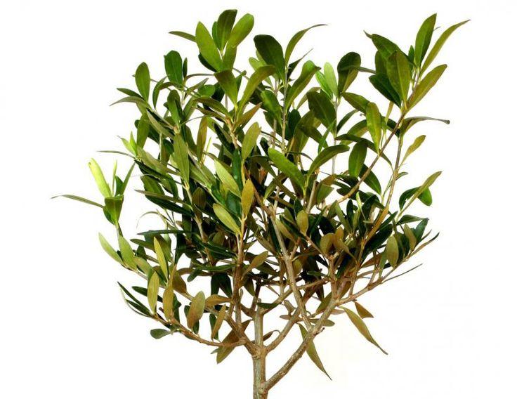 17 best ideas about plantar un arbol on pinterest - Casa en el arbol ...