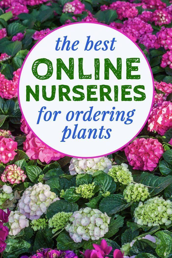 How To Buy Garden Plants Online