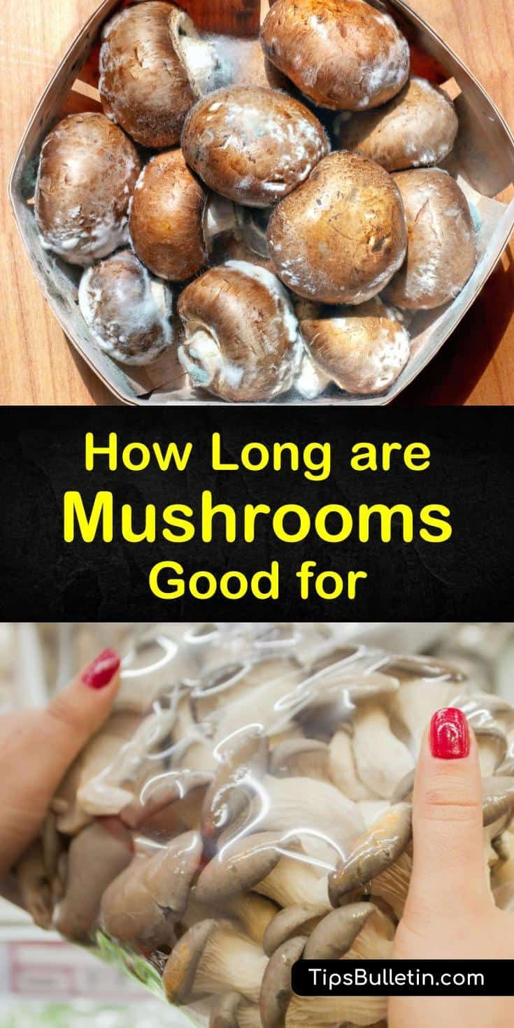 How Long Are Mushrooms Good For In 2020 Stuffed Mushrooms How To Cook Mushrooms Food