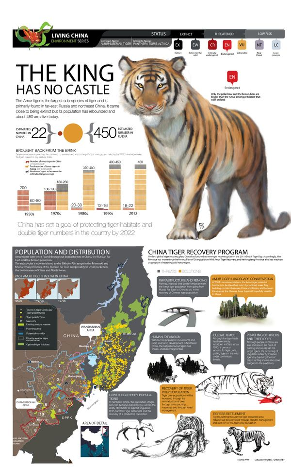 a look at the amur tiger and its extinction The caspian tiger is also known as the  extinction the caspian tiger became extinct because it was used by  what is the cause of its extinction and when.