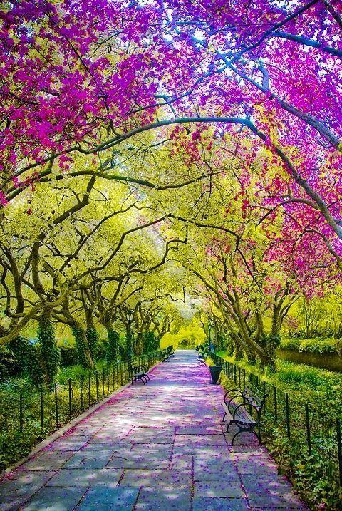 Spring in Central Park, New York City #nyc #newyork