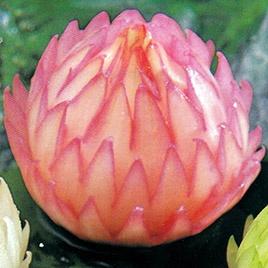 Garde Manger Carving Sets for Fruit Art | Temple of Thai