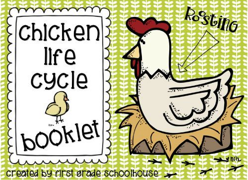 Chicken Printable Quotes: 34 Best Chicken Life Cycle Images On Pinterest