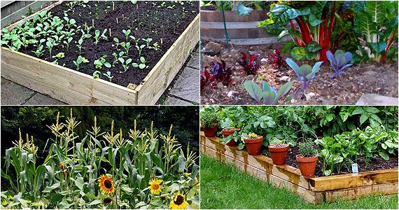 Grow the tastiest, fattest tomatoes, lettuce, carrots, potatoes, celery, zucchini, pumpkin, cucumber and more! This amazing ecosystem is set up you will be able to harvest fresh organic food every single day.