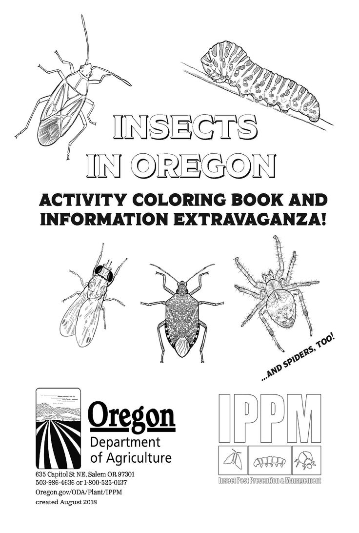 Insects in Oregon : activity coloring book and information
