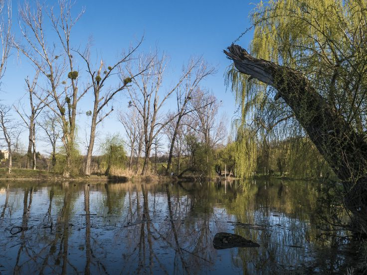 park, lake, trees, color, sky, reflections, water, willows,
