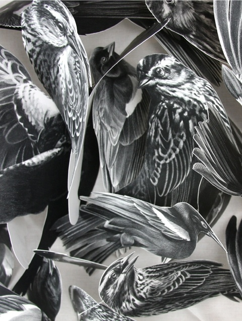 33 best artist christina empedocles images on pinterest for Drawing on wax paper