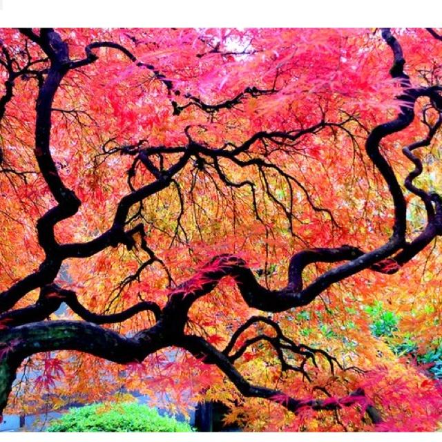 Roze en gele herfstbomen.