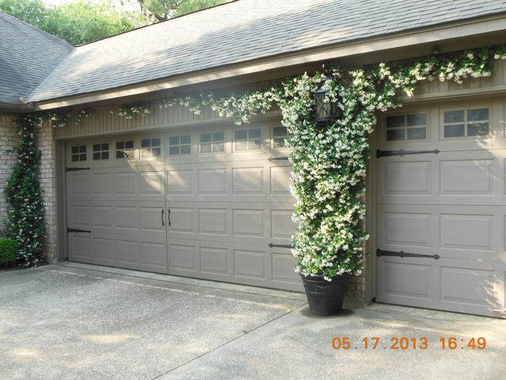 Confederate Jasmine Growing Between Garage Doors