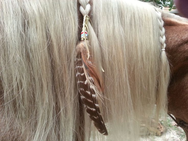 horse tail hair style 1000 ideas about mane on dressage 5028 | ecf98b680f783a7d9af07d0b9c3eee34