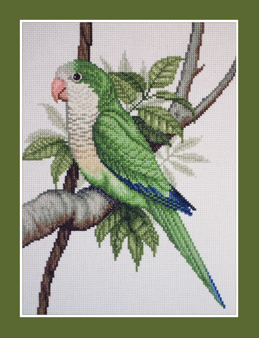 Quaker parrot cross stitch; e-pattern available