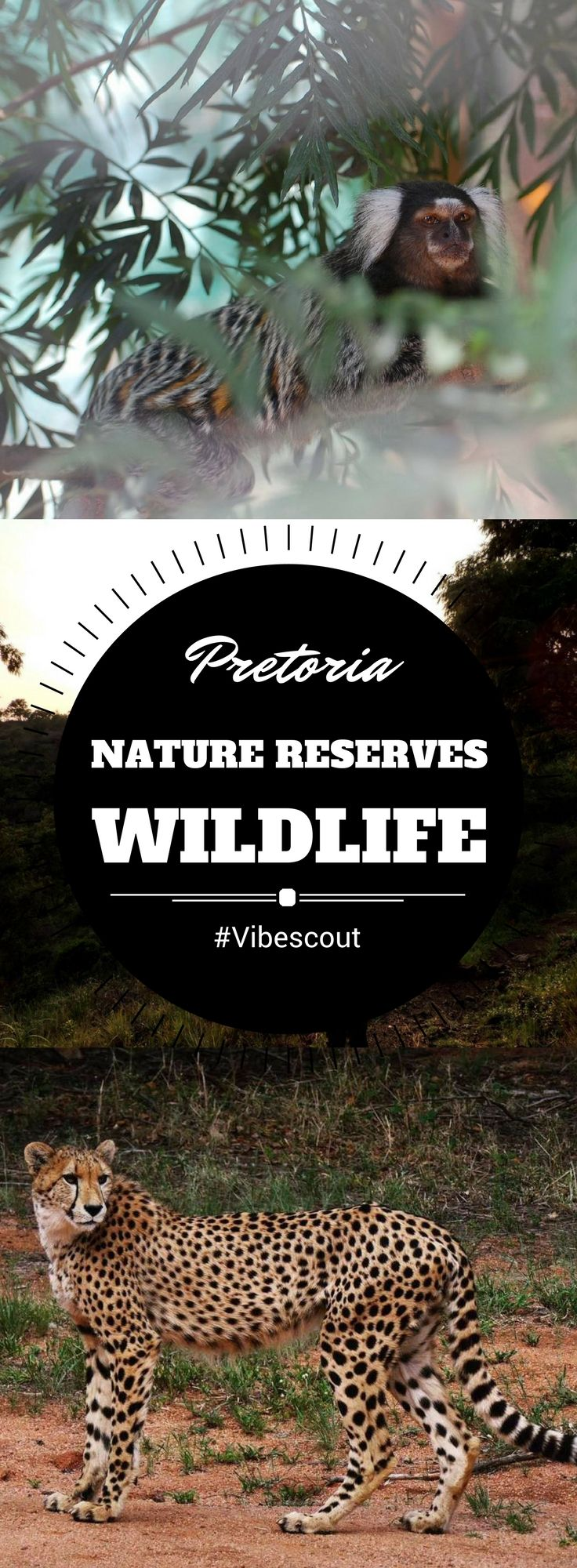 Pretoria offers plenty of opportunities and places to view wildlife in wide open spaces. From hedgehogs to cheetahs, birds and reptiles to lions, you can come and see them all.