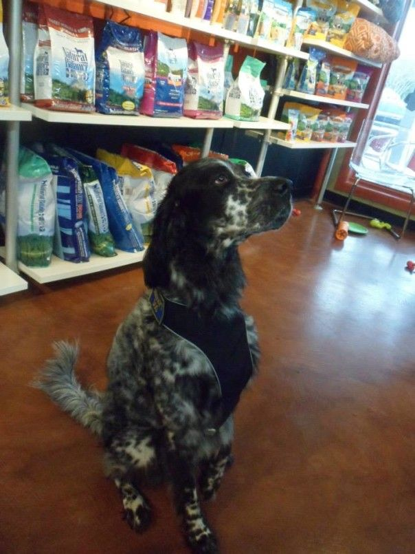 51 best dog self wash images on pinterest dog wash service dogs green dog wash colorado solutioingenieria Gallery