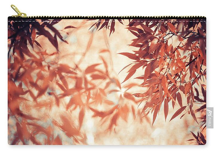 Jenny Rainbow Fine Art Photography Carry-all Pouch featuring the photograph Autumnal Foliage Frame by Jenny Rainbow