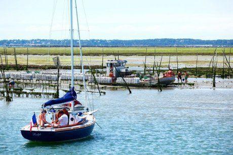 Bassin d'Arcachon : la triploïde au cœur #huitres #bassin #arcachon #oysters