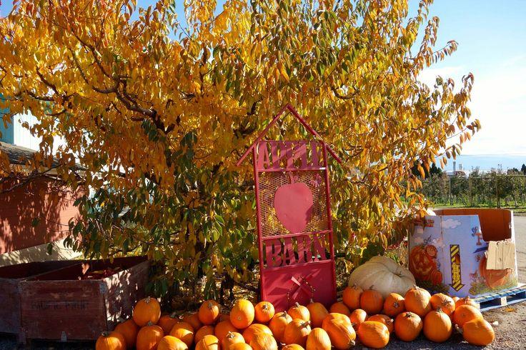 Apple Barn Oct 2016 Summerland