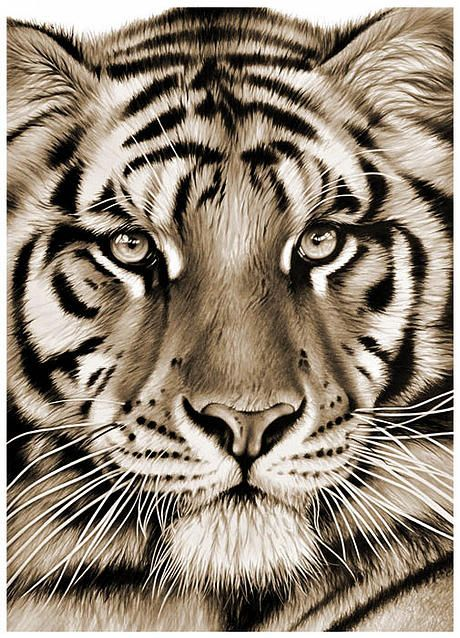 Best Richard Symonds Images On Pinterest Animal Beautiful - Stunning drawings of endangered wild animals by richard symonds