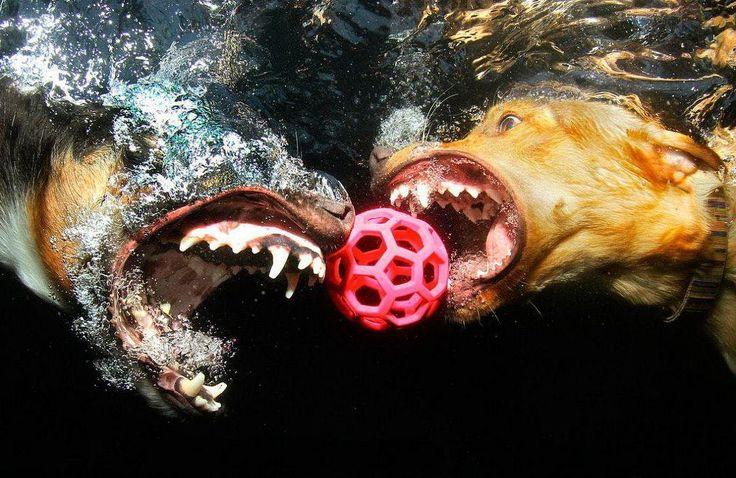 Подводные собаки от Seth Casteel