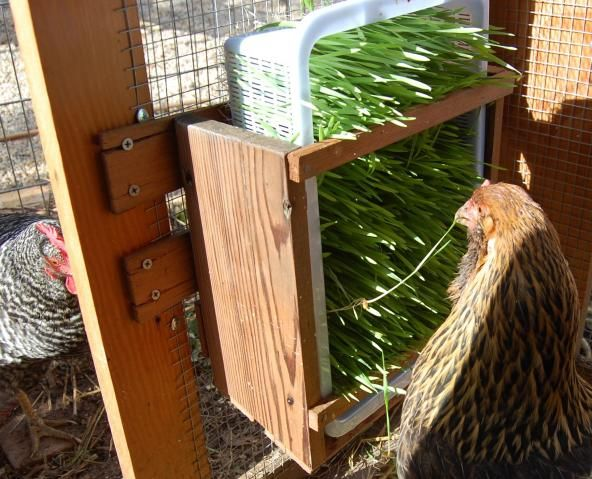I love this - a feeder for sprouts!  I'm going to need to make one of these for our outdoor run.