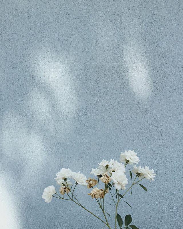 White Flowers Style Pastel Background Blue Aesthetic Pastel Flower Aesthetic