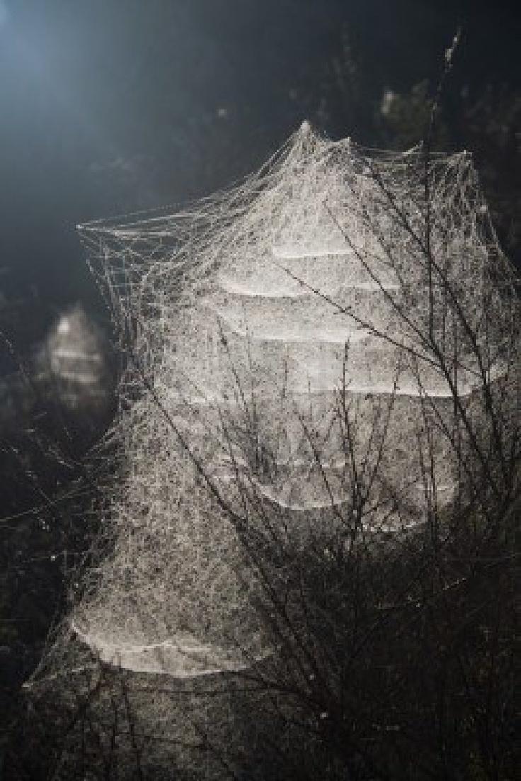 Beautiful Spiders Web