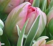 spring bouquets - Google Search