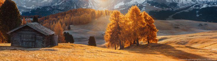 Утренний свет на плато ALPE DI SIUSI #горы #доломиты #италия #лиственница #осень…