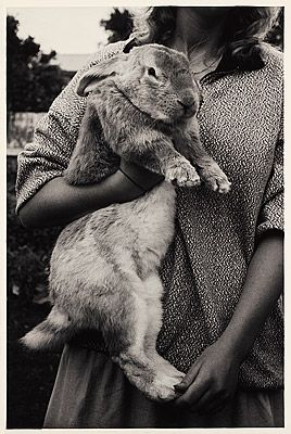 PERYER , Peter | Sandy the Flemish giant