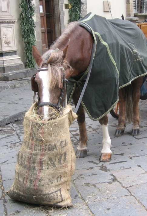 Horse Eating From Feed Bag Horsing Around Pinterest And Animal
