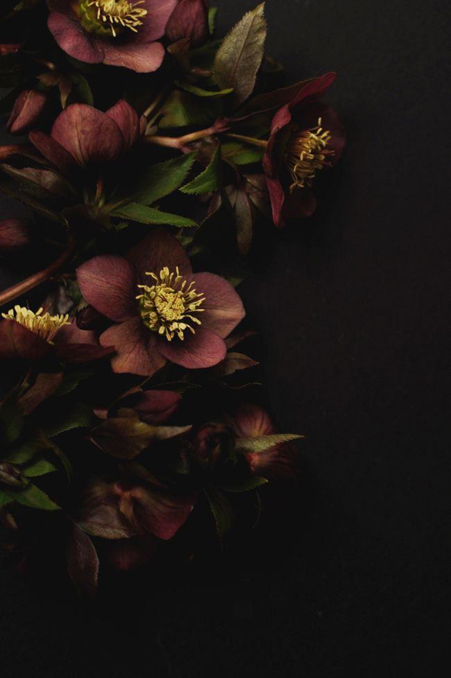Hellebores   Photographed by Jennie Prince