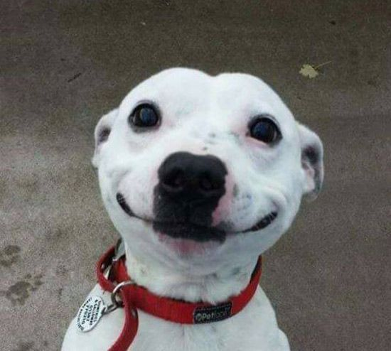Картинки по запросу dog