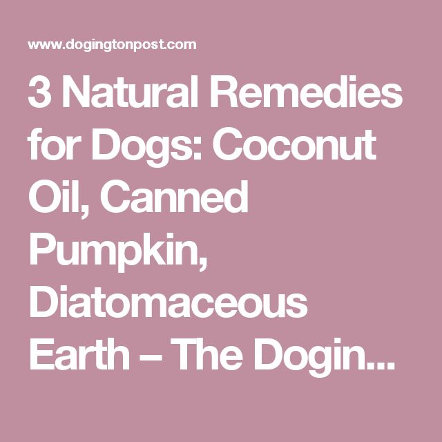 3 Natural Remedies for Dogs: Coconut Oil, Canned Pumpkin, Diatomaceous Earth – The Dogington Post