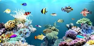 AQUARIUM SUPPLIES, ACCESSORIES AND EQUIPMENT: Aquarium Supplies in Canada- Render a hygienic hab...
