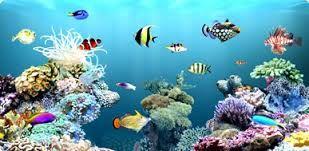 AQUARIUM SUPPLIES, ACCESSORIES AND EQUIPMENT: Aquarium Supplies in Canada- Render a hygienic hab...