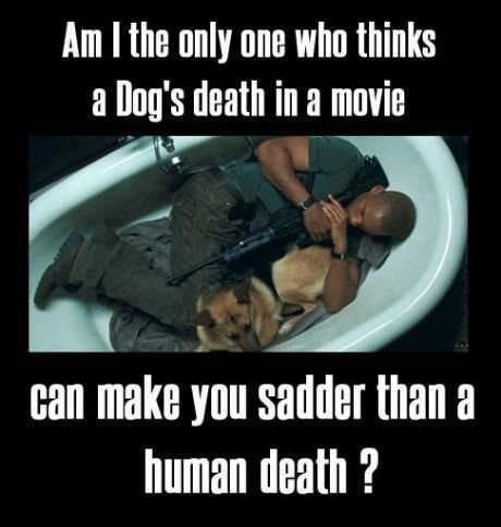 I always cry when the dog dies...Dust Jackets, Dust Wrappers, Real Life, Will Smith, Watches Movie, German Shepherd, Book Jackets, Dust Covers, True Stories