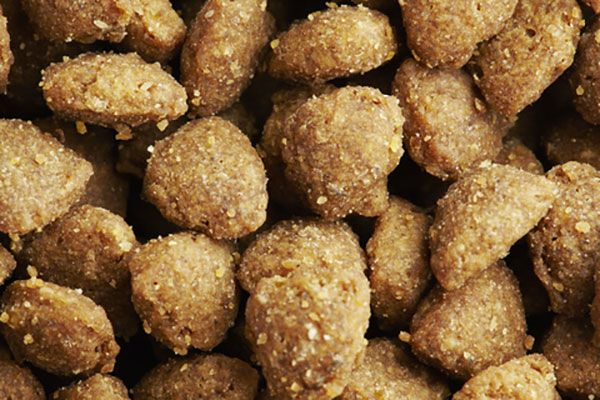 Are you looking for a great alternative to store bought kibble? This quick and easy recipe can be used as