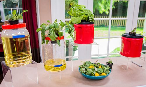Home & Family - How-To - Hydroponic Plants with Shirley Bovshow | Home & Family