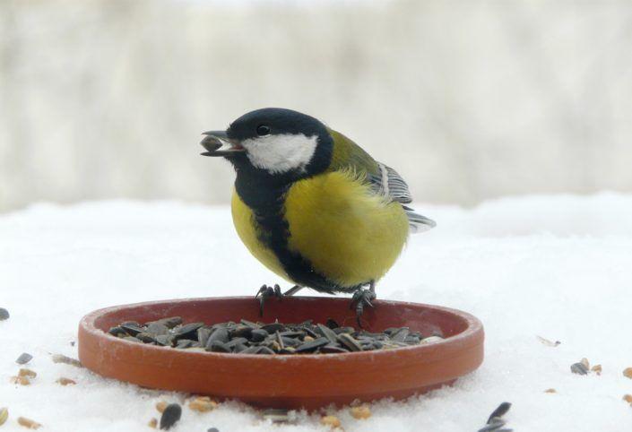 Welche Tiere sollten wir im Winter füttern?